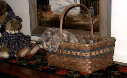 Molly in a basket