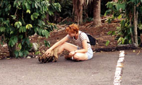 Soon-to-ba-named Pele, the tortoiseshell cat at Manuka State Wayside Park