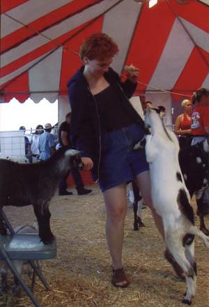 Anne feeding a goat