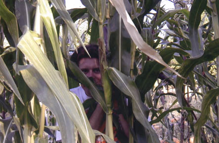 Steve in the corn field