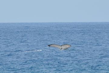 NEL_03_whale