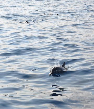 dolphin_01