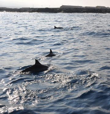 dolphin_03