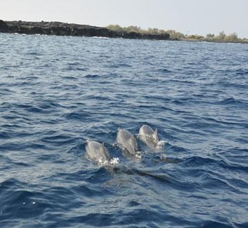 dolphin_05