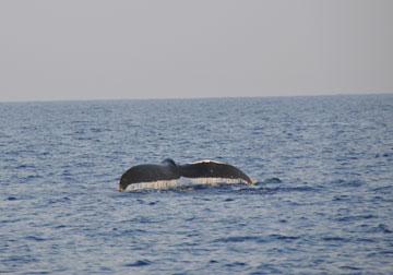 whale_trip_01
