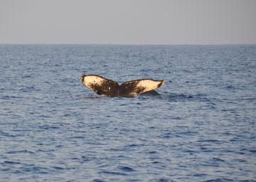 whale_trip_02