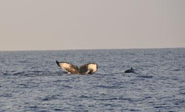 whale_trip_03