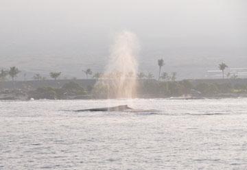 whale_trip_04_spout