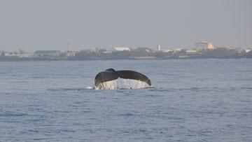 whale_trip_05