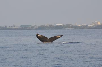 whale_trip_06