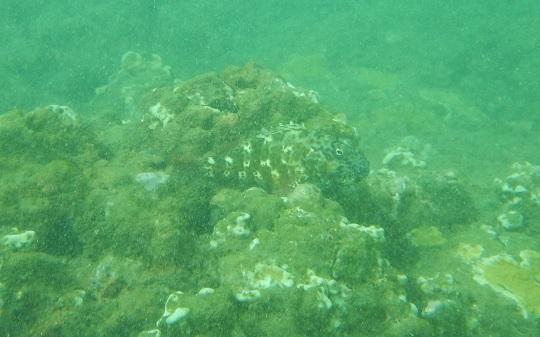 fish on Na Pali Coast