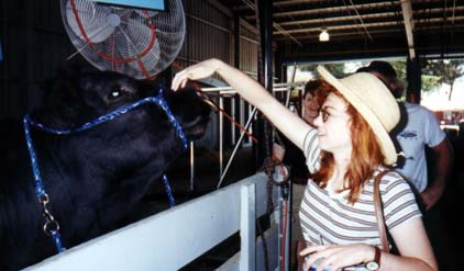 Anne with a bull at the Sonoma County Fair