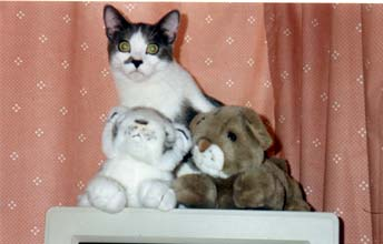 Ezra with stuffed animals