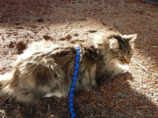 MacStar on a walk at Best Friends Animal Sanctuary