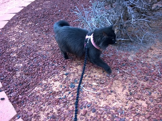 Zoey on a walk at Best Friends Animal Sanctuary
