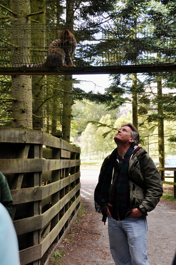 Steve with Scottish Wildcat at Highland Wildlife Park