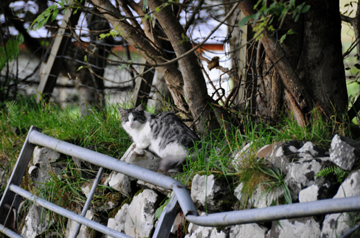 friendly feline near Talisker Bay