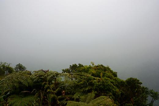 foggy Kilohana Lookout