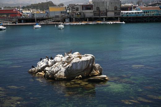 cormorants on Monterey Bay