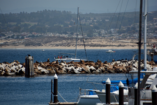 sea lions on Monterey Bay