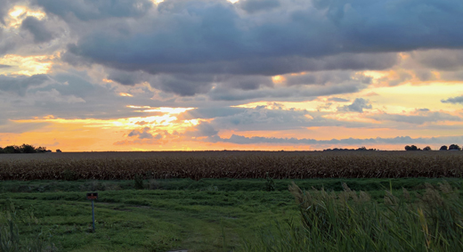 sunset on cornfields