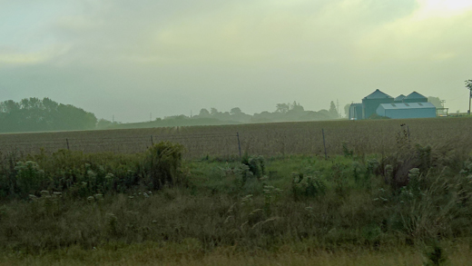 early morning cornfields