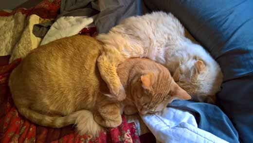 Jonas & Fergus