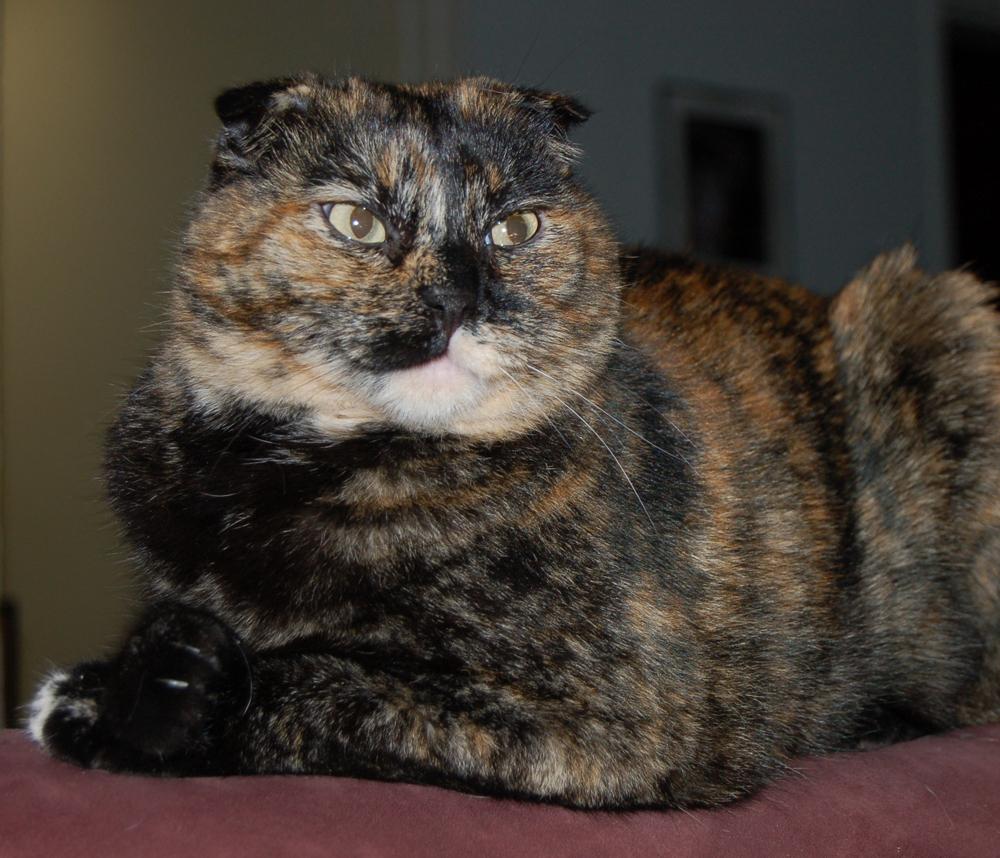 Profile Pic 20060506